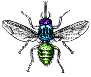 Thorax diagram of a tsetse fly showing the head thorax and abdomen ccuart Choice Image