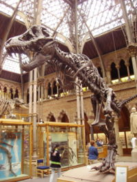 The Oxford University Museum Of Natural History