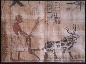 How did domestication/agriculture lead to civilization?
