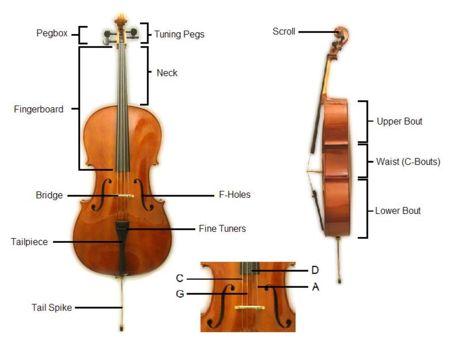 The Construction Of A Cello